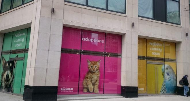 Petsmart 244 5th Avenue